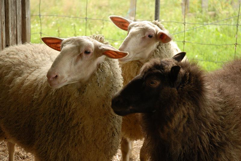 Transforming Wool - Ateliers d'un pas feutré